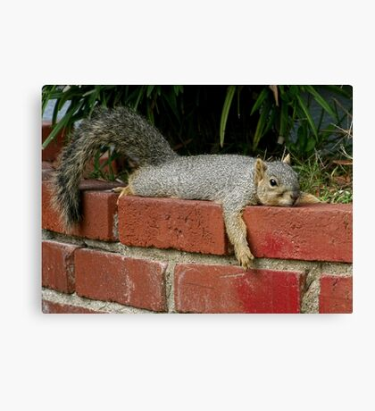 Just Chillin' Canvas Print