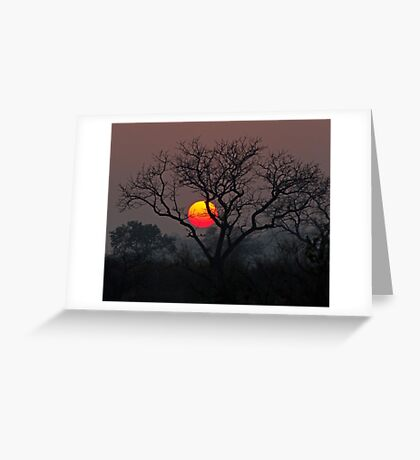 Sunset At Londolozi Greeting Card