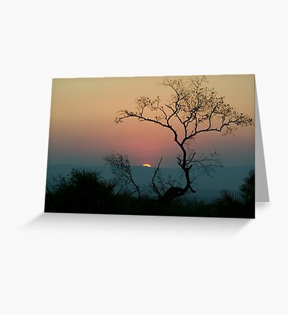 Tree Watching The Perfect Sunset Greeting Card