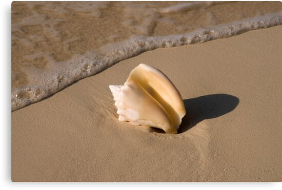 Seashell, Rose Island, Bahamas by Shane Pinder