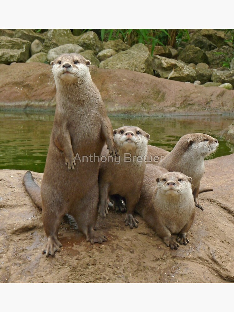 The power of otter by dailyanimals