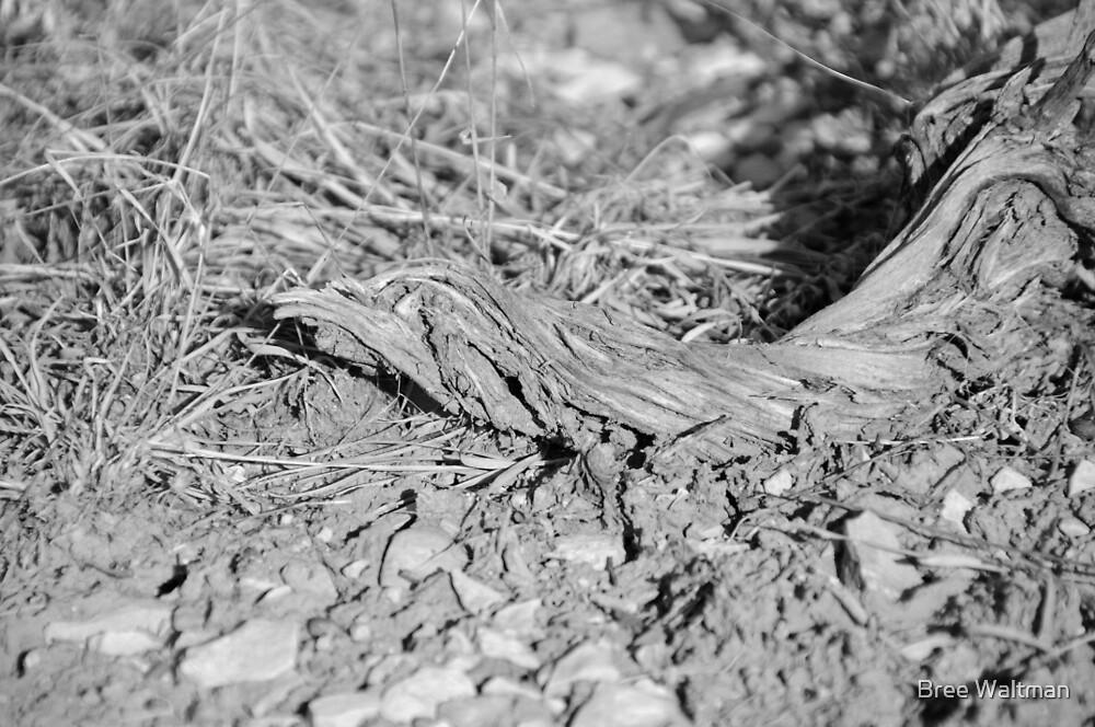 Shnitzle Stick by Bree Waltman