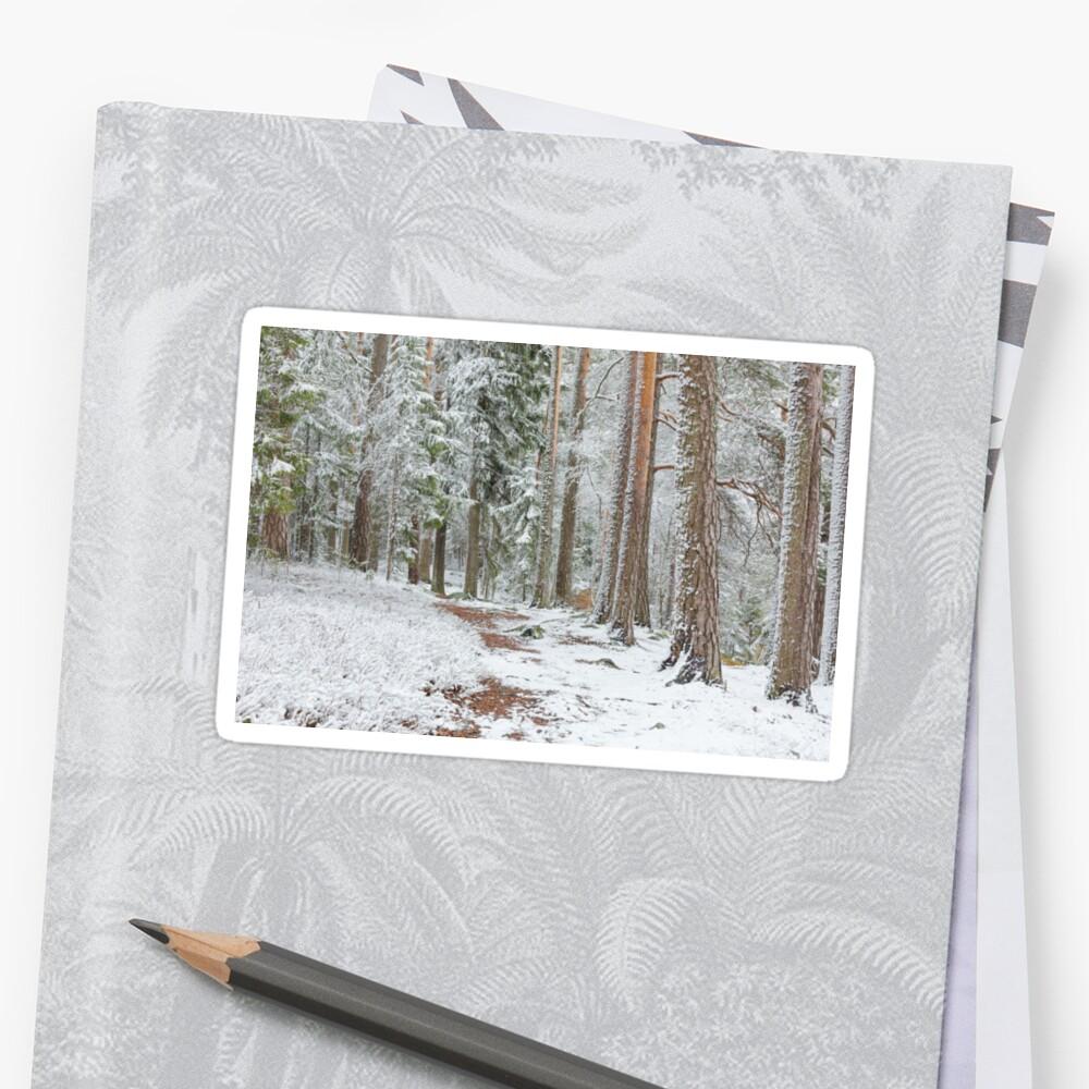 Beautiful serene winter forest landscape Sticker