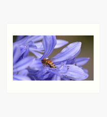 Bumble bee delight Art Print