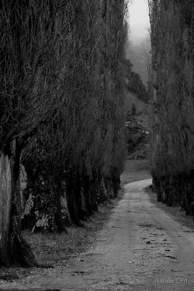 The Avenue by Natalie Ord
