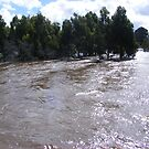 Our River turned into a raging torrent by David Smith
