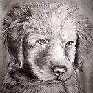 Puppy by Garrett Nichols