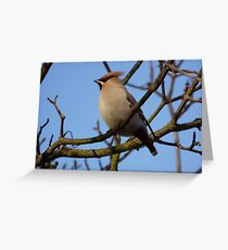 Wonderful Waxwing Greeting Card