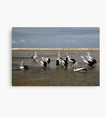Pelican Beach II Canvas Print