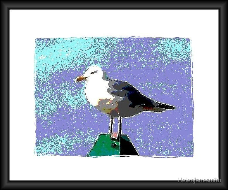 Seagull No 1. by Helenjanesmith