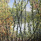Glimpse of the River (c) Ian Ridpath 2010 by IanRidpath