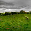 feeling sheepish by adouglas