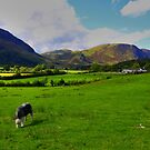 sheep dog by adouglas