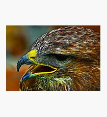 The Beak Photographic Print
