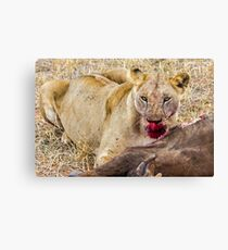 Africa - Lioness & kill Canvas Print