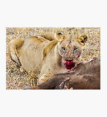 Africa - Lioness & kill Photographic Print