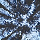 Looking Up At Trees by by-jwp