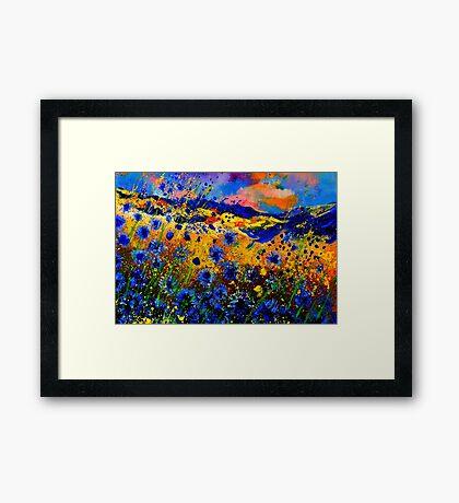 blue  cornflowers 746 Framed Print