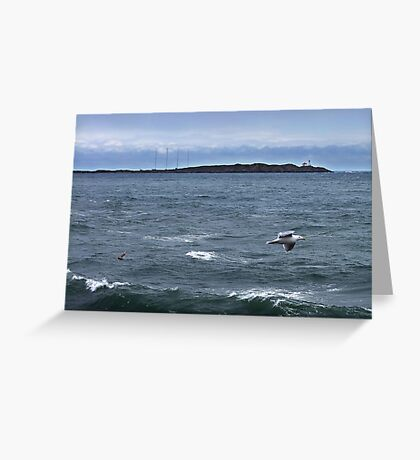 Trial Island and Seabirds Greeting Card