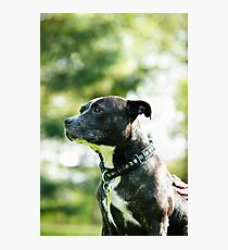 Staffie Love Photographic Print