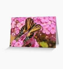 Swallowtail and Closed Wings Greeting Card