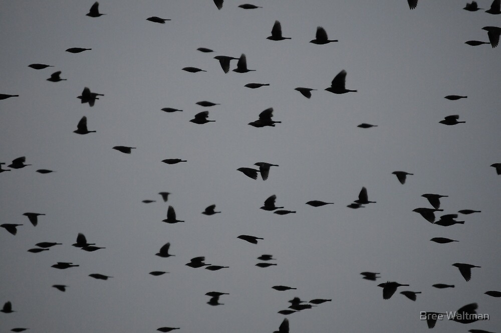Flock by Bree Waltman