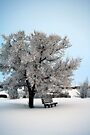 Wonderful, Wonderful Winter by Rhonda Blais