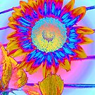 Sunflower Dreams by Cara Schingeck