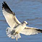 Fully Spread Wings by Scott Hayes