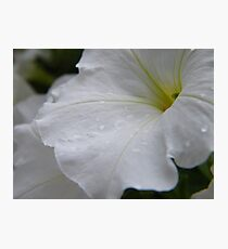 Dew on white flowers Photographic Print
