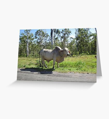 Surrounded by Cattle Greeting Card