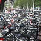 Bikes by Tim Webster
