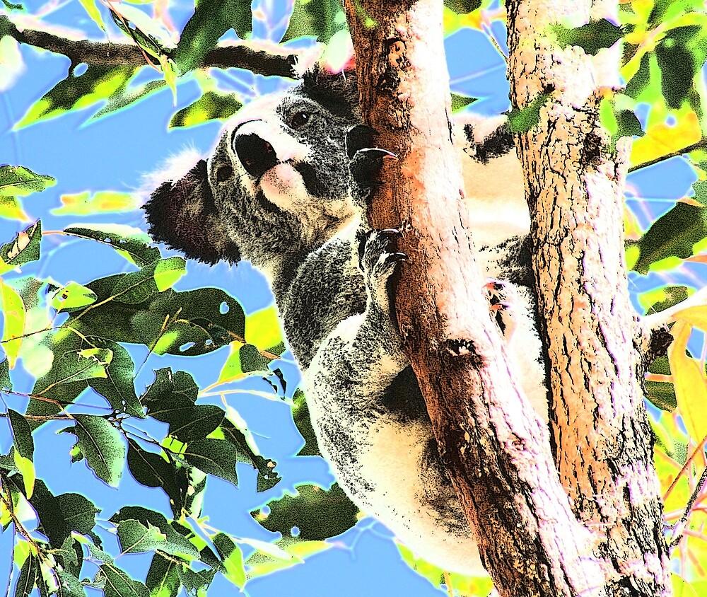Imperious Koala by mokacat