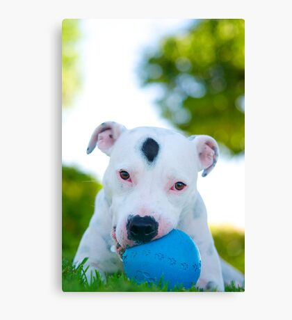 Cookies and his favourite ball Canvas Print