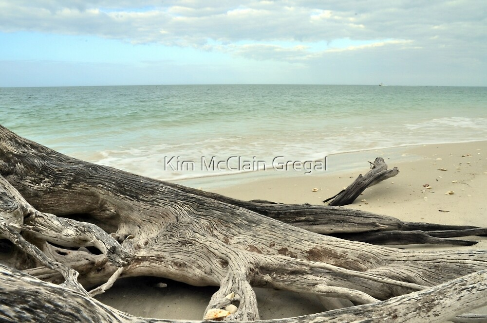 Stump at Lover's Key by Kim McClain Gregal