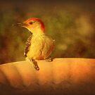 My Friend, Red-Bellied Woodpecker by DottieDees