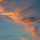 Phoenix in the Air by Lita Medinger