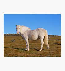 Dartmoor: All White Now Photographic Print