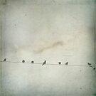 Birds on a wire ... by BertaDrost