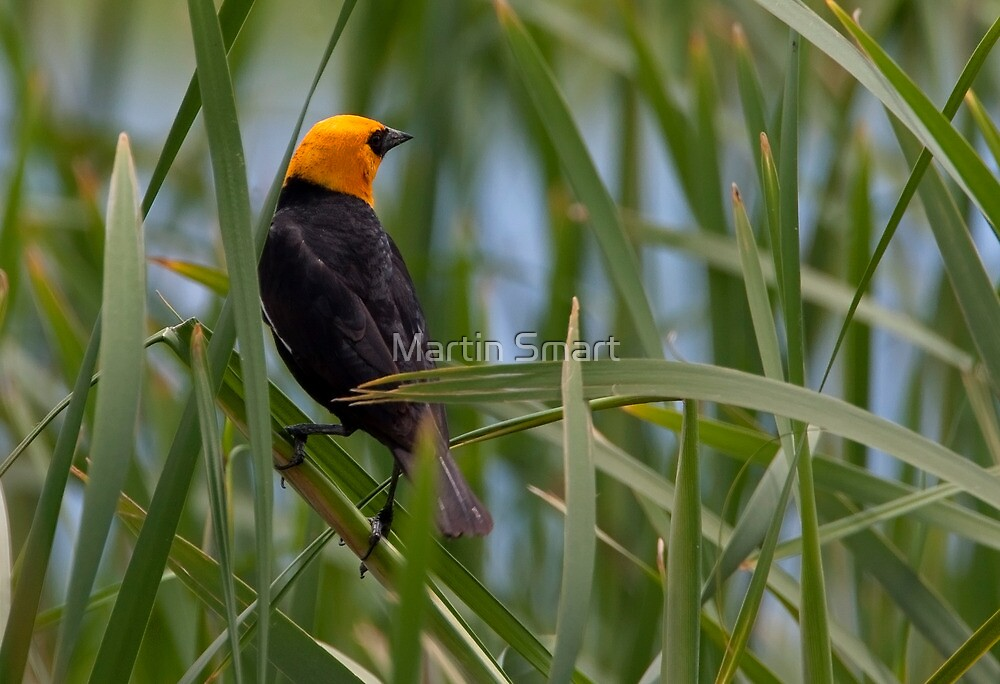 A Good Reed by Martin Smart