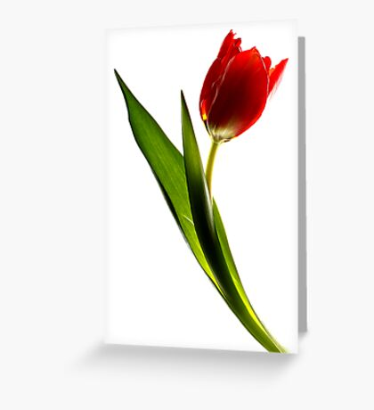 red tulip - #2 Greeting Card