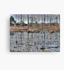 Alabama Swamp Canvas Print
