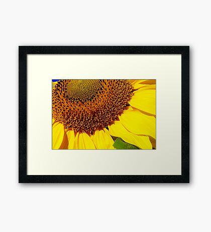 cheery sunflower close up Framed Print