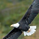 Bald Eagle Magic by David Friederich