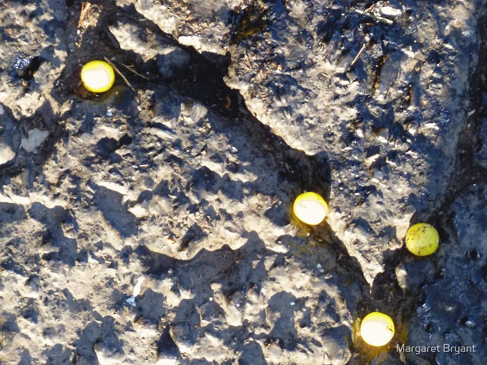 01-15-11  The Social Order of Lemonheads by Margaret Bryant