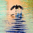 Gallinule in motion by Anthony Goldman