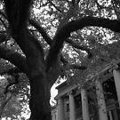 Live Oak & Columns by AnalogSoulPhoto