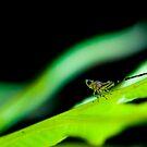 Leafhopper Nymph II by Didi Bingham