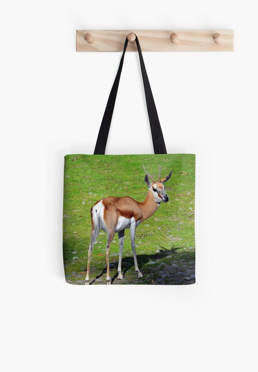 99921199b4 Springbok At The Orana Wildlife Park. Christchurch