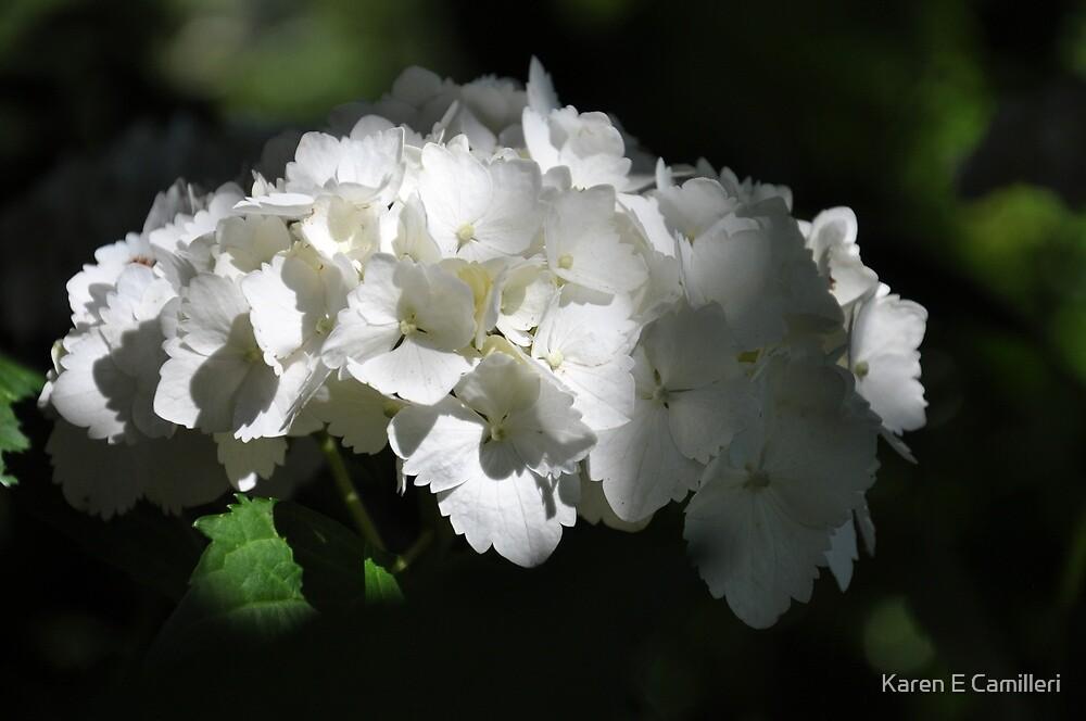 summer blessings by Karen E Camilleri